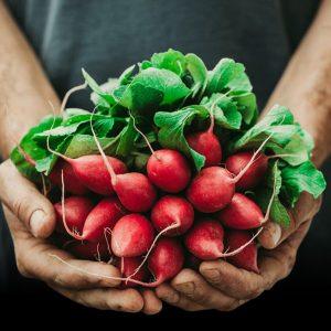 The Produce Wholesaler- Wholesale